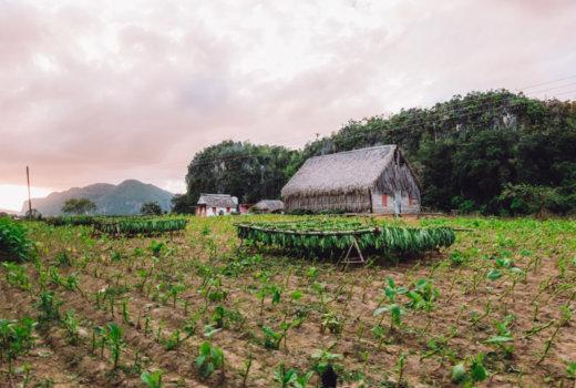 Escursione a cavallo nella Valle di Viñales: la Cuba che non ti aspetti!