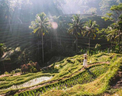Le terrazze di riso di Ubud, una vallata che toglie il fiato
