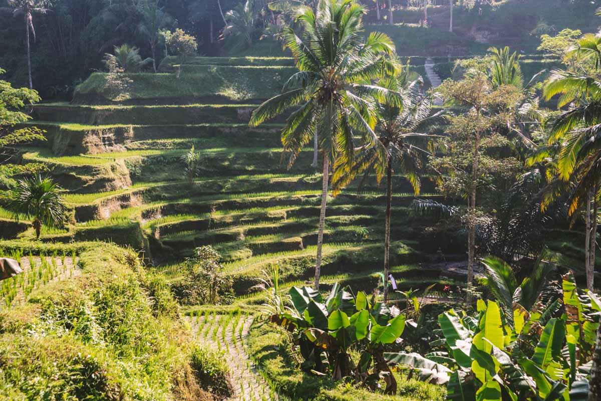 terrazze di riso di ubud tegallalang