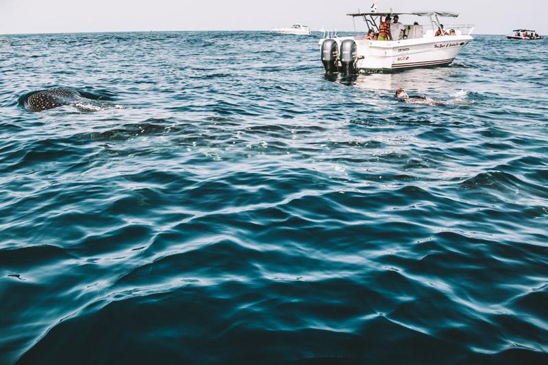 cosa fare in riviera maya playa del carmen