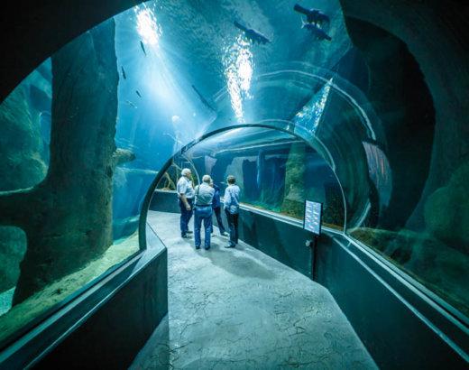 Acquario d'acqua dolce più grande d'Europa: il primato lo detiene Losanna